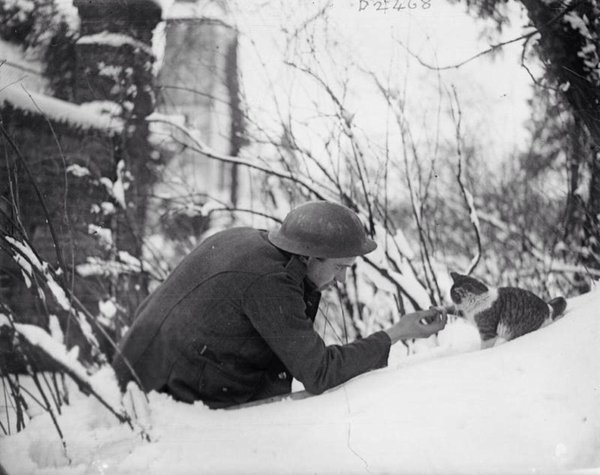A British soldier shaking hands with a kitten in the snow. Neulette, France, 1917
